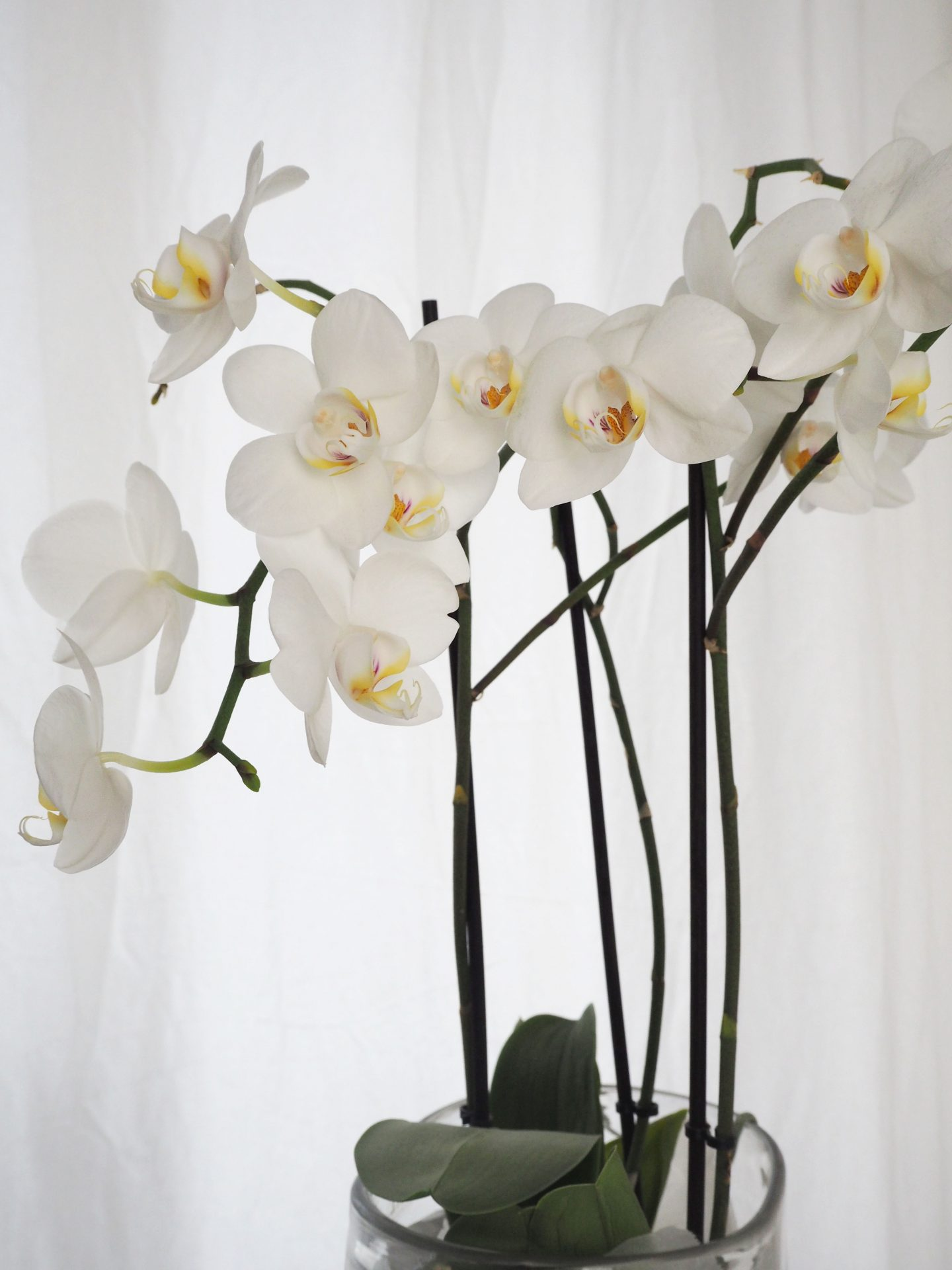 Keep good care of orchids